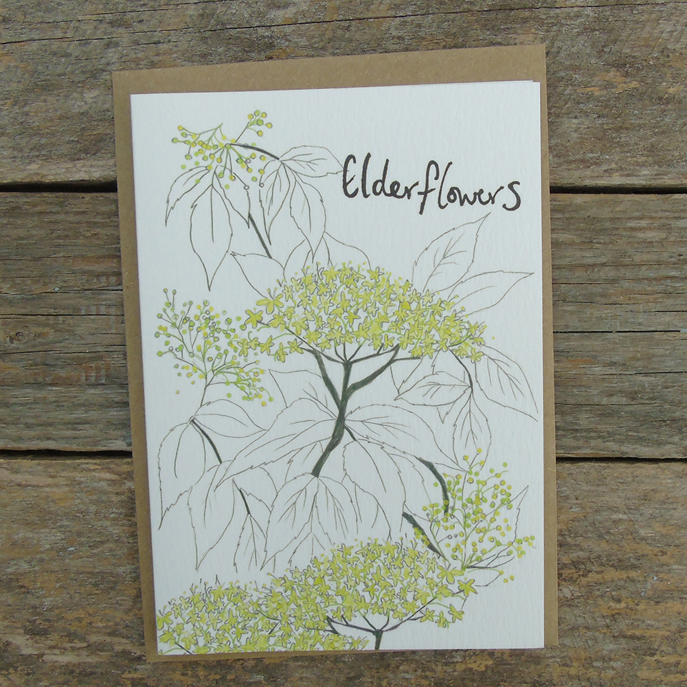 PYO4 elderflowers_web