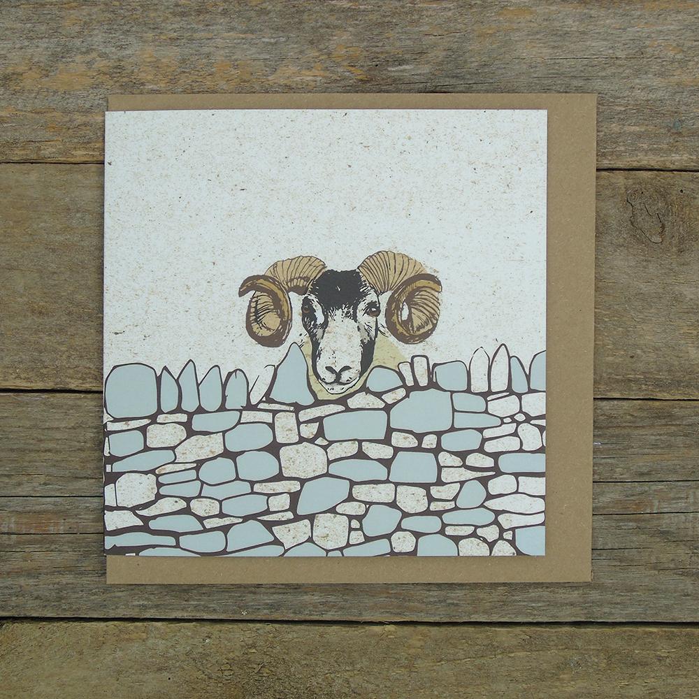 Sheep DWO6 Web