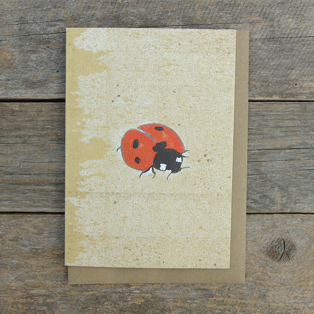 SP13 Ladybird card web