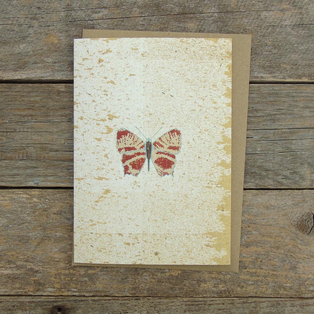 SPO1 speckled Butterfly card web