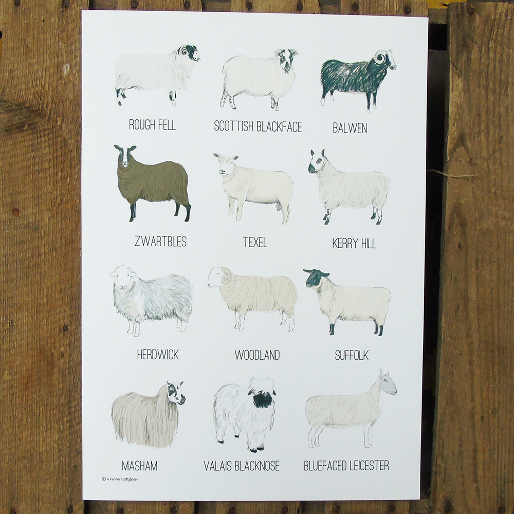 Sheep Breeds Print - A Farmer's Daughter