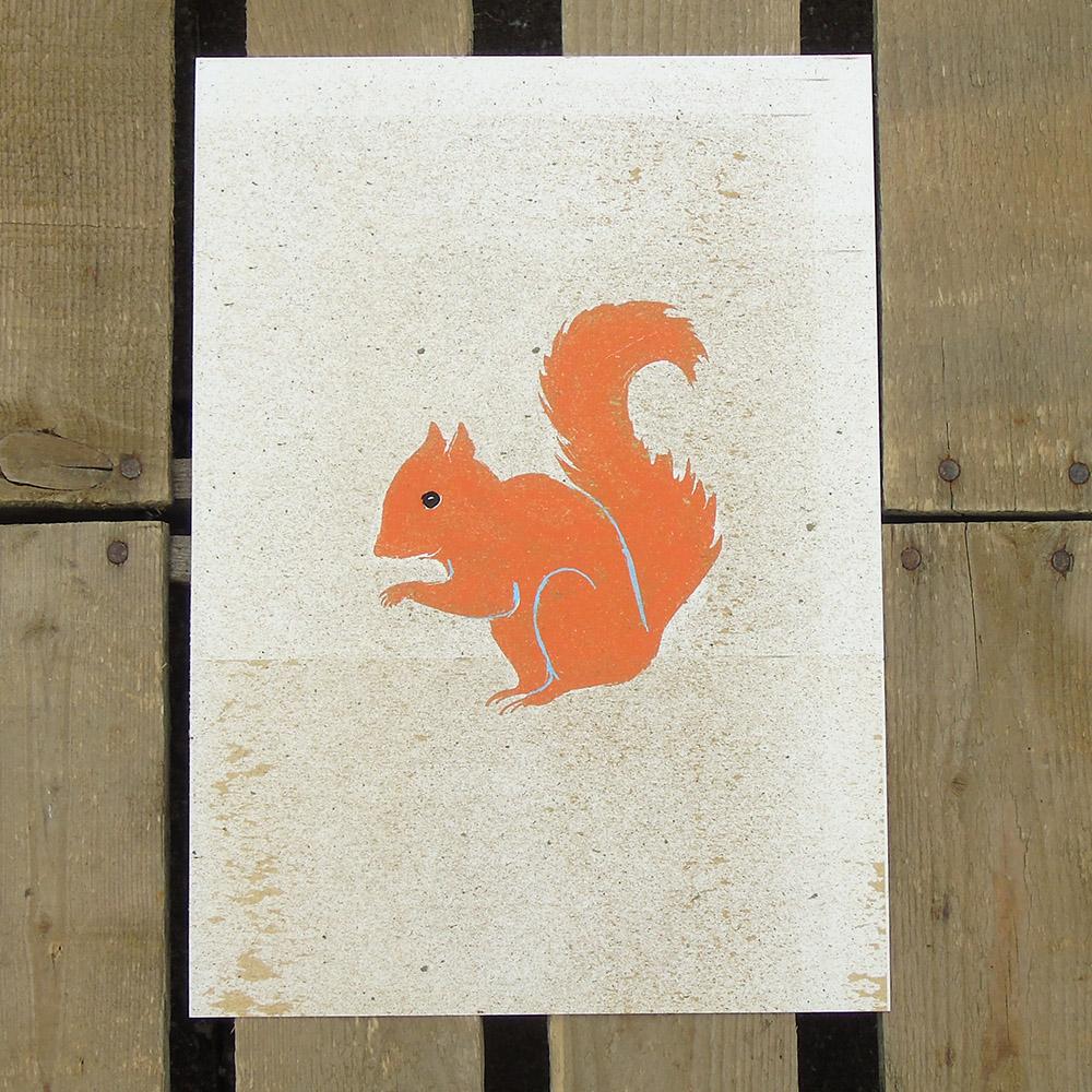 squirrel print A4