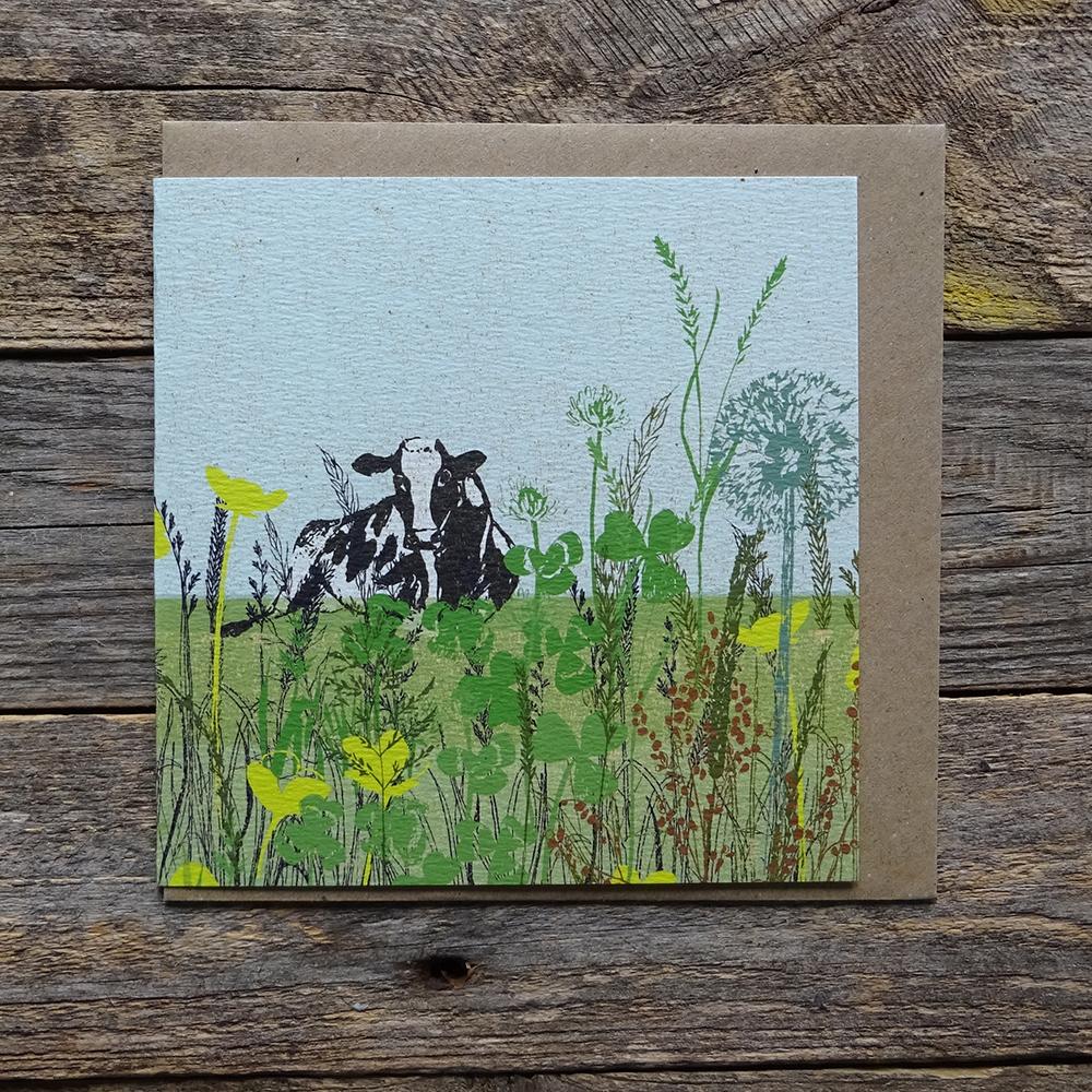 MDO3 cow meadow web