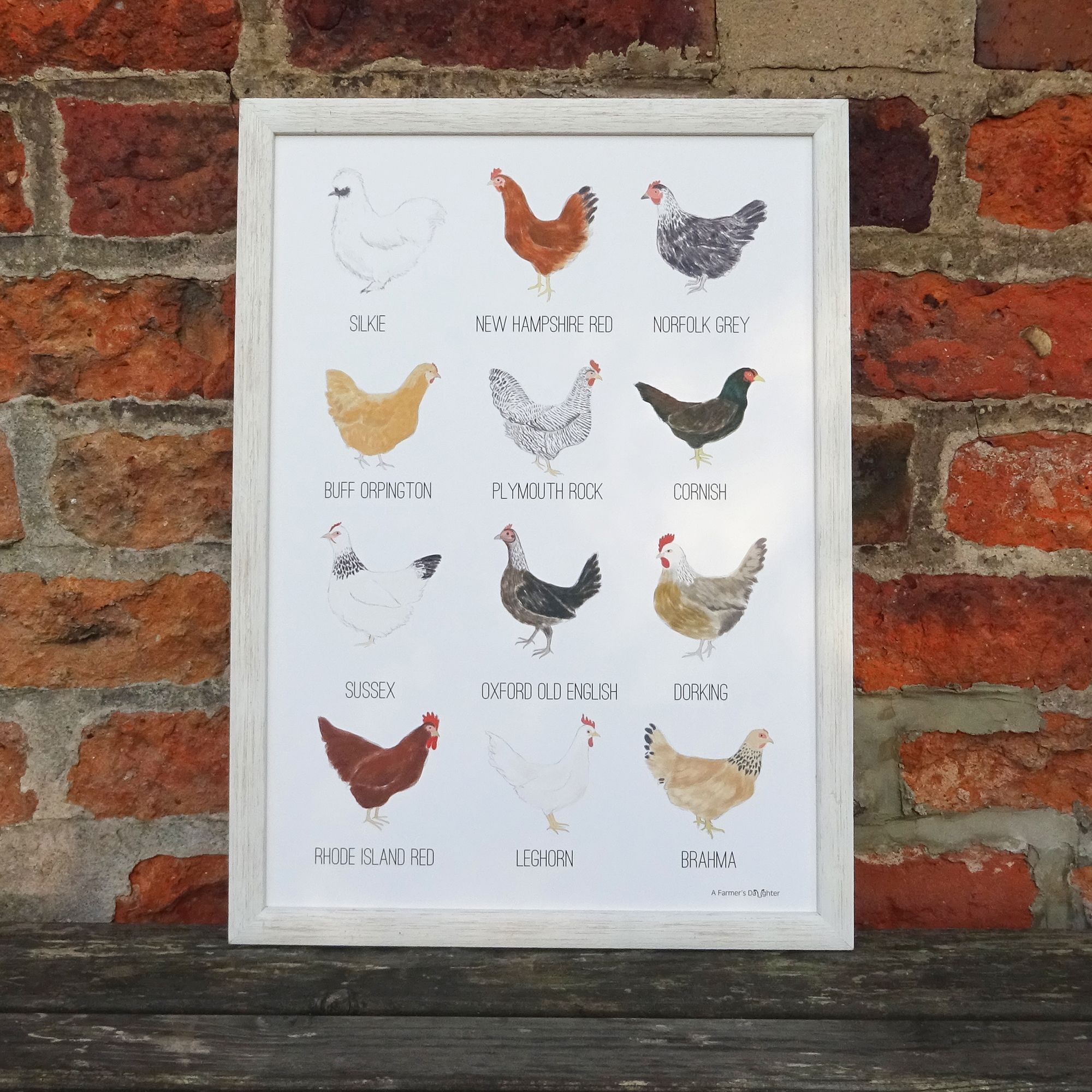 poultry breeds print WEB